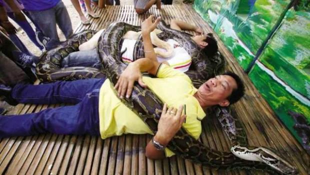 Картинки по запросу serpiente en el zoologico